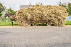 One brown horse transportation hay on wooden cart. Ukraine. Summer day Stock Photos