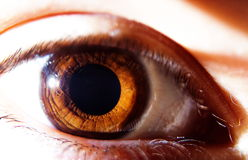 One Brown Human Eye Stock Photo