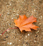 One brown leave Royalty Free Stock Photos