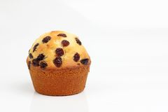 One brown muffin Stock Photography