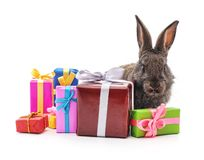 One brown rabbit with gifts royalty free stock photos