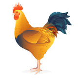 One Brown Rooster Stock Images
