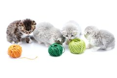 One brown striped adorable kitten and grey fluffy cute kitties are playing with orange and green yarn balls in white. Photo studio. Wool gray funny amusing stock image