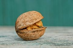 One brown walnut lies on a gray wooden board royalty free stock image