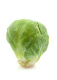 One Brussels sprouts in closeup Stock Photos