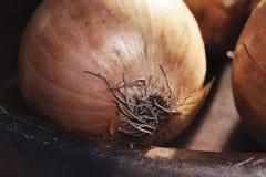One bulb onion raw vegetable cuisine tasty delicious golden vegan rich aroma sweet Stock Photo