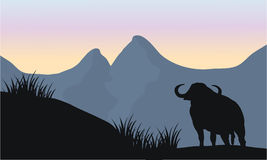 One bull silhouette of scenery Stock Photos