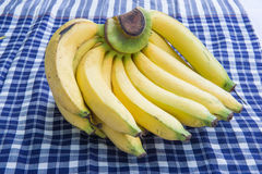 One bunch of bananas , tropical fruit Stock Photos