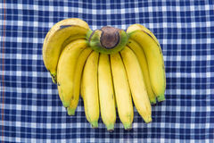 One bunch of bananas , tropical fruit Royalty Free Stock Photography