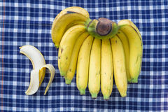 One bunch of bananas , tropical fruit Royalty Free Stock Image