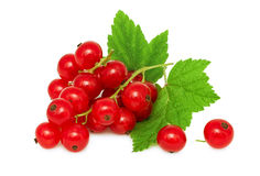 One bunch of ripe redcurrant with green leaves (isolated) Stock Photos