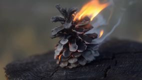 One burning cone in the middle of a cracked stump. Natural bonfire hardener. Fire starter. Close up stock video