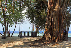 One burst to rest and enjoy. A slope swing in a big tree on the Maldives Stock Image