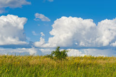 One bush in a meadow grass. Blue clouds sky backgrounds Stock Photo