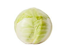 One cabbage yield Stock Image