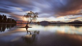 One Calm Tree. Stock Image