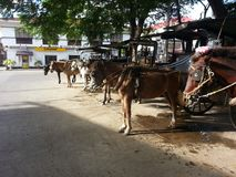 Kalesa. One can hire the kalesa to roam vigan and experience history Stock Images