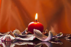 One candle and tulip's petal Royalty Free Stock Image