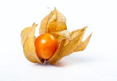 One cape gooseberries Royalty Free Stock Image