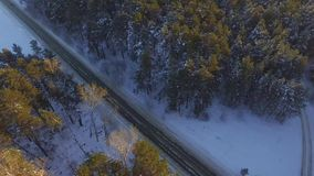 One car driving through the winter forest on country road. Top view from drone. Aerial view of a road through the forest stock video