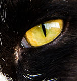 One cat eyes. The fierce eyes of cats stock image