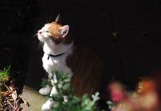 One cat in gardon. A male cat in gardon, gree eye  brown color Royalty Free Stock Image