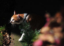 One cat in gardon. A male cat in gardon, gree eye  brown color Royalty Free Stock Photography