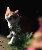 One cat in gardon. A male cat in gardon, gree eye  brown color Stock Photos