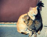 One cat rubbing against another cat royalty free stock images