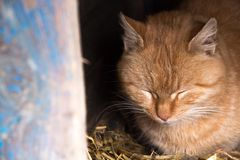 One cat sitting in the booth. One cat sits in the booth and resting on the soft straw with my eyes closed Royalty Free Stock Image