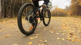 One caucasian children rides bike road in autumn park. Little girl riding black orange cycle in forest. Kid goes do. Bicycle sports. Biker motion ride with stock video