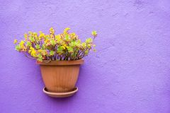 One ceramic pots with flowers closeup Royalty Free Stock Photo