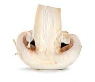 One champignon isolated Stock Photography
