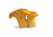 One chanterelle mushrooms on a white background Stock Images