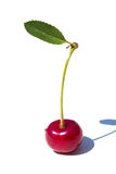 One cherry with leaf Royalty Free Stock Photography