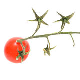 Only one cherry tomato on branch isolated on white. Stock Images