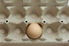 One chicken egg in empty paper egg tray box stock images
