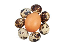 One chicken and a few quail eggs Royalty Free Stock Image