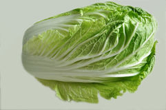 One Chinese cabbage Royalty Free Stock Photo