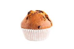 One chocolate chip muffin. Isolated on white Royalty Free Stock Image