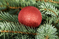One christmas ball over tree. Stock Photos