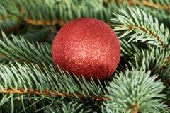 One christmas ball over tree. Stock Photos