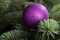 One christmas ball over tree. Royalty Free Stock Photography