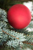 One christmas ball over tree. Royalty Free Stock Photo