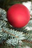 One christmas ball over tree. Royalty Free Stock Photo