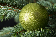 One christmas ball over tree. Royalty Free Stock Image