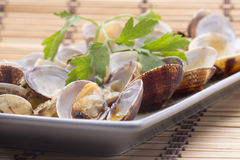 One clams Stock Photography