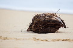 One coconut Stock Photography