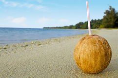 One coconut with a straw on the sandy sea shore Stock Photos