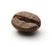 One coffee bean Stock Image